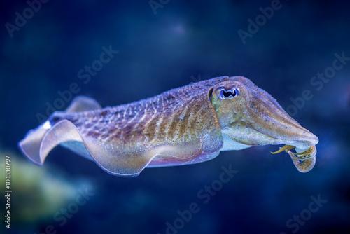Fotomural Tintenfisch