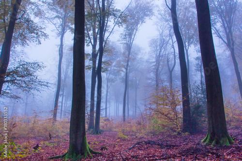 mglowy-jesien-lasu-krajobraz-w-siebengebirge-niemcy