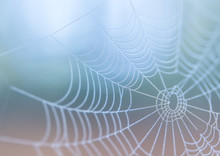 Spiderweb In Morning Mist Haze...