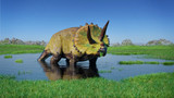 Triceratops horridus dinosaur from the Jurassic era eating water plants (3d illustration)