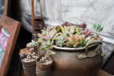 A succulent plant in an antique container / Old-fashioned foliage plants
