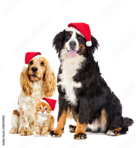 Keuken foto achterwand Kat dog and kitten in the New Year and Christmas hat