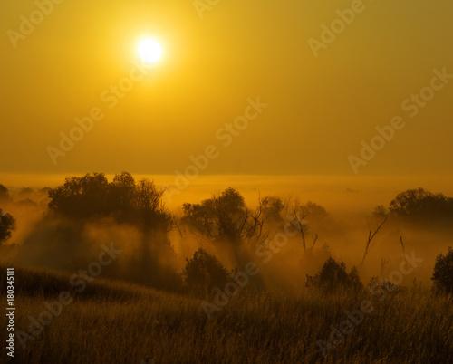 Plakat Drzewa w mgle przy wschodem słońca