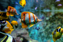 Colorful Tropical Fishes And C...