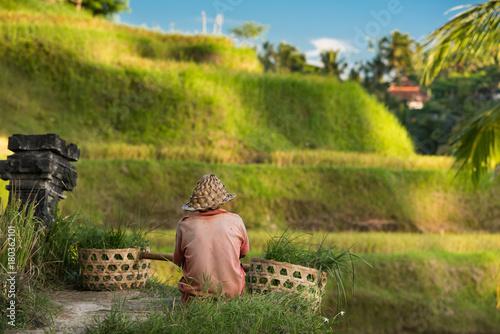 Garden Poster Rice fields Tellalang rice fields, Ubud - Bali