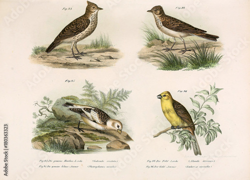 Illustration of birds. Fototapeta