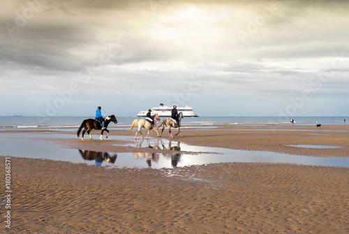 Papiers peints Cappuccino chevaux sur la plage le soir