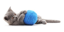 Gray Cat With A Ball.
