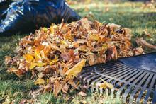 Raking Autumn Fall Leaves