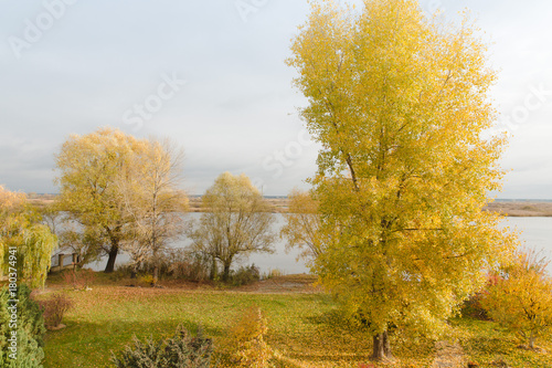 Fotobehang Zwavel geel Beautiful landscape with magic autumn trees and fallen leaves on the riverside. Harmony, relaxation concept