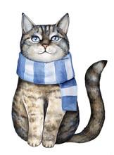 Cute Gray Tabby Kitten Dressed...