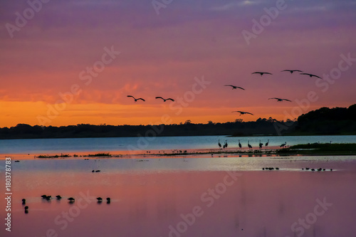 Poster Oranje eclat Sandhill cranes arriving to roost at sunset
