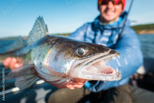 Photo Happy angler holds angry Zander fish being in the boat on the river