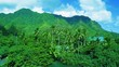 Aerial-Lush Tropical Green Jungle Trees River Exotic Hawaiian Kahana Valley. Aerial: Tropical Blue Ocean Bay and Green Mountain. Turquoise Ocean, blue sky, clouds, lush green trees.