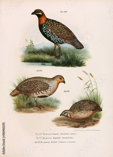 Leinwand Poster Illustration of birds.