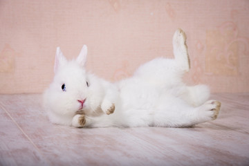Funny white decorative rabbit playing on the floor