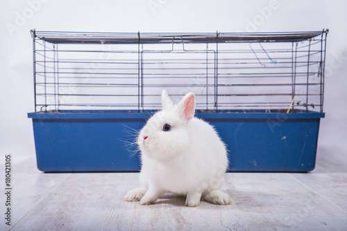 Little white decorative rabbit with a cage