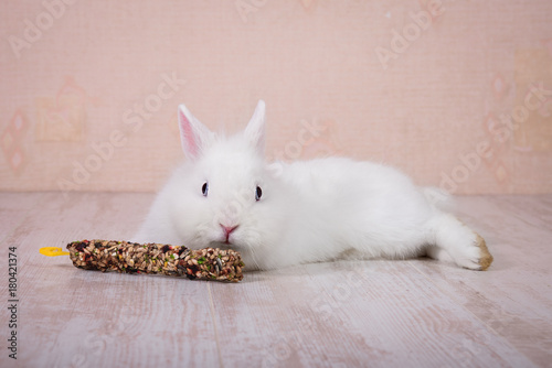 Little white decorative rabbit with a treat