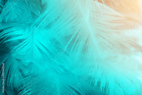 Fototapeta Green turquoise and blue color trends feather texture background,Light orange obraz