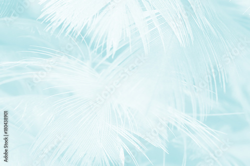 Foto op Plexiglas Historisch geb. Beautiful light green - white vintage color trends feather texture background