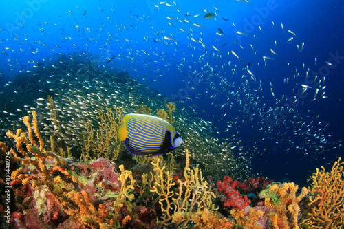 Poster Coral reefs Coral reef and fish underwater in ocean