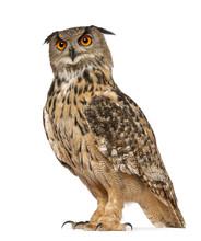 Portrait Of Eurasian Eagle-Owl...