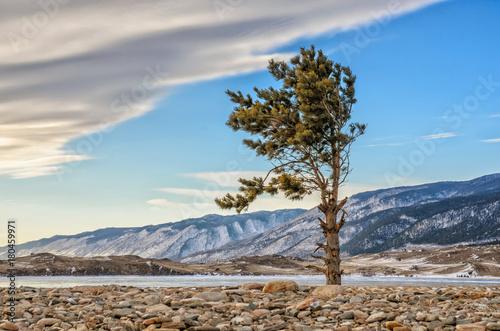 Zdjęcie XXL Jeden zielona sosna i kamyki z chmurami blisko jeziornego Baykal i góry