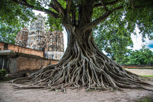 Sukhothai Historical Park In T...