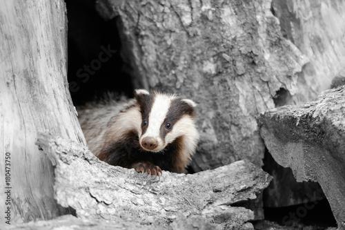 fotografia-czarno-biala-w-kolorze