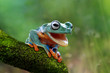 Tree frog open mouth