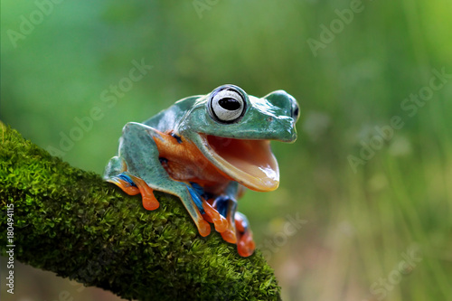 Tuinposter Kikker Tree frog open mouth