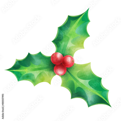 Fotografie, Obraz  Christmas ornament, holly vector illustration isolated on white background for d