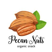 Pecan Nuts In Cartoon Style