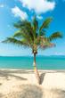 palm at sand beach of Samui island Thailand