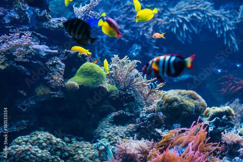 Fotomagnes Tropikalna ryba. Podwodny świat krajobraz