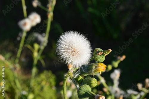 Fototapeta Natura