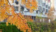 Autumn City Landscape