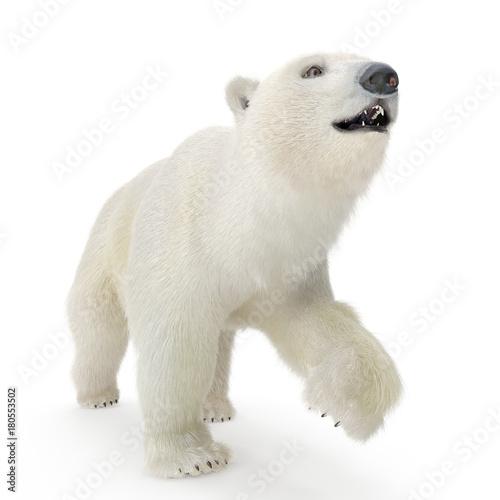 Poster Polar bear Large male Polar bear walking on a white. 3D illustration