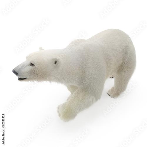 Acrylic Prints Polar bear Large male Polar bear walking on a white. 3D illustration