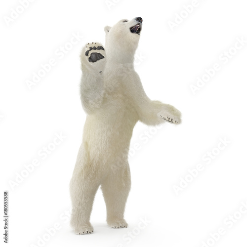 Tuinposter Ijsbeer Large male White Bear Standing Pose on a white. 3D illustration