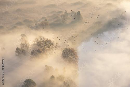 Papiers peints Beige in volo sulla nebbia