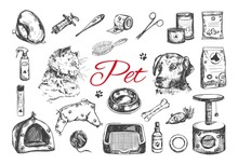 Pet Shop And Veterinary Set. Vector Hand Drawn. Isolated Objects On White With A Persian Cat And Dog.