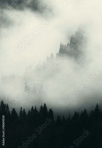 Poster Morning with fog dark landscape with fog trees and mountains