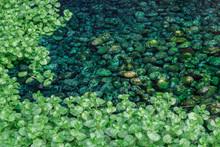 Pebbles Surrounded By Vegetati...