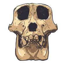 Illustration Of A Monkey Skull On Background. Vector.