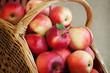 Спелые красные яблоки лежат в плетеной корзине.