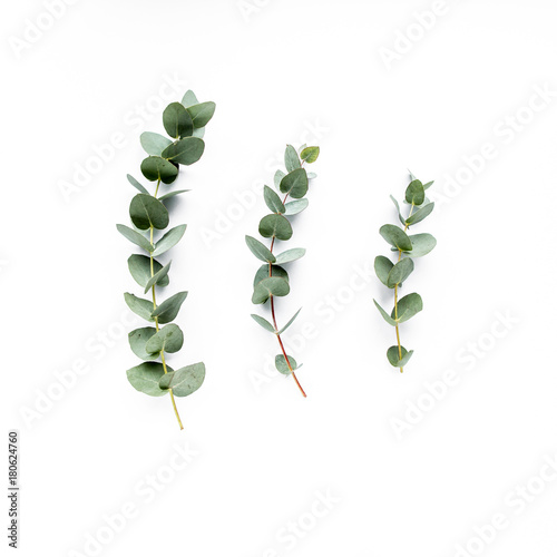 green leaves eucalyptus on white background. flat lay, top view Wall mural