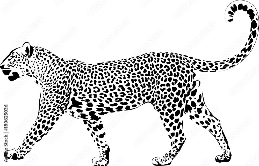 leopard zum ausmalen  kinder ausmalbilder