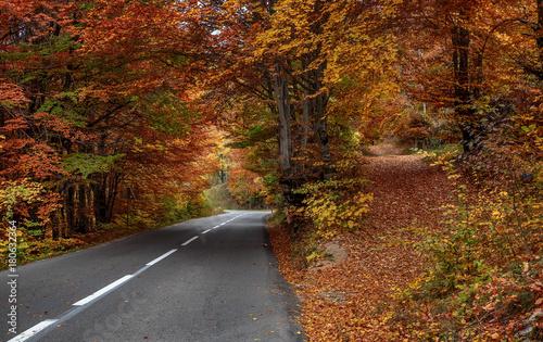 Aluminium Prints Autumn Asphalt road in the woods in autumn