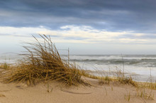 Windswept Dunes And Grasses Ab...